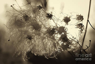 Art Print featuring the photograph Filaments by Eunice Gibb