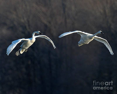 Photograph - Final Approach by Craig Leaper