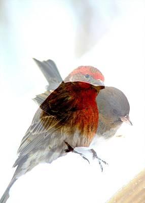 Finch And Junko Art Print by Rick Rauzi