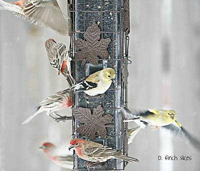 Finches Art Print by Debbie Sikes