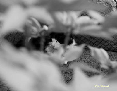 Photograph - Find The Kitty by Jeanette C Landstrom