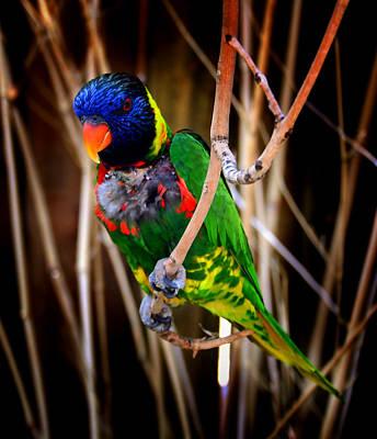 Photograph - Fine Feathered Friend by Ellen Heaverlo