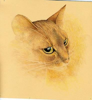 Finjani Chai Art Print by Ann Hamilton
