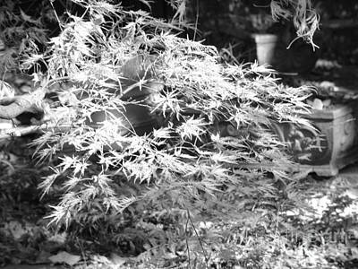 Photograph - Fire Bush In Black And White by Rod Ismay