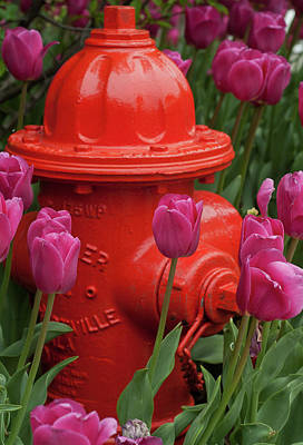 Fire Plug And Tulips Art Print