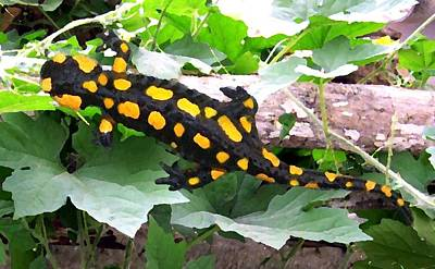 Salamanders Mixed Media - Fire Salamander by Vejay Singh