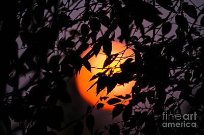 Blazing Sun Photograph - Fireball In The Sky by Terry Elniski