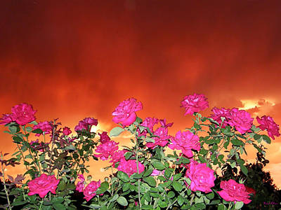 Art Print featuring the photograph Firery Roses by Wendy McKennon