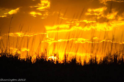Art Print featuring the photograph Firey Sunset by Shannon Harrington