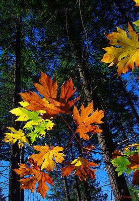 Photograph - Firs And Leaves by Steve Warnstaff