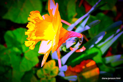 Photograph - First Bloom Showing Attitude by Diane montana Jansson