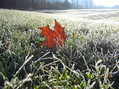 Photograph - First Frost Oak Leaf by Leontine Vandermeer