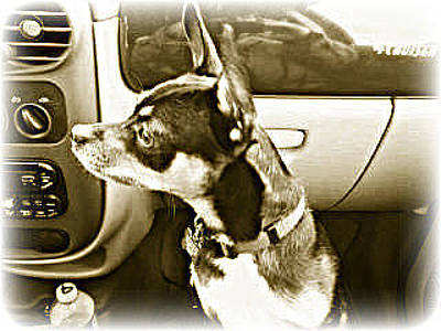 Photograph - First Ride Home by Pamela Hyde Wilson