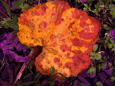First Sign Of Autumn Art Print by Gordon H Rohrbaugh Jr