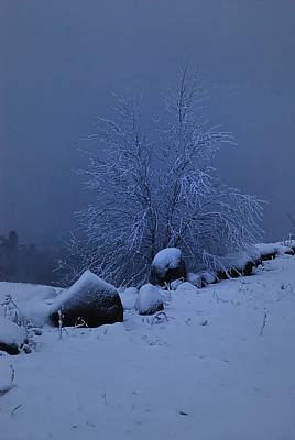 Maine Nature Photograph - First Snow At First Light by Susan Capuano