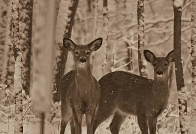 Photograph - First Snow Of The Season by Douglas Barnett