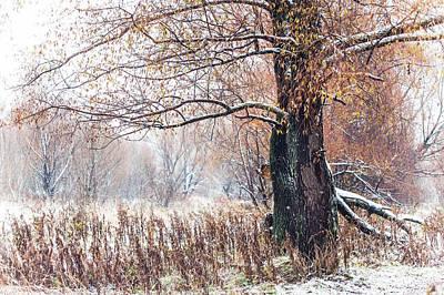 First Snow. Old Tree Art Print by Jenny Rainbow