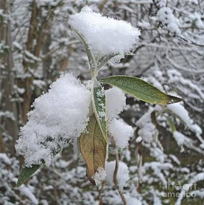 First Snow On Leaves Art Print