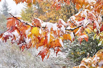 Virginia Snow Photograph - First Snow by Thomas R Fletcher