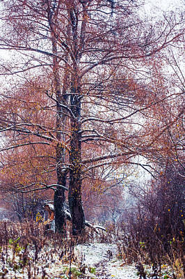 First Snow. Winter Coming Art Print by Jenny Rainbow