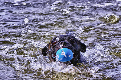 Photograph - First Swim by Kelly Reber