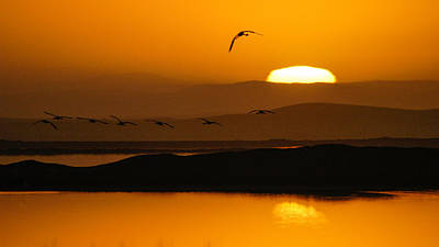 Photograph - Firstlight Flight by Alistair Lyne