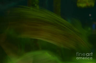 Photograph - Fish Abstract by Donna Brown