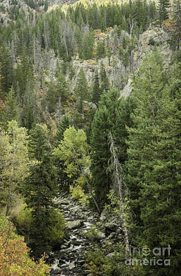 Photograph - Fish Creek Falls Downstream II by David Waldrop