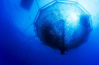 Cage Dive Photograph - Fish Farm Pen by Dave Fleetham