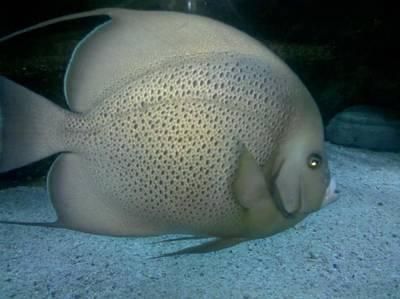 Fish In Motion Art Print