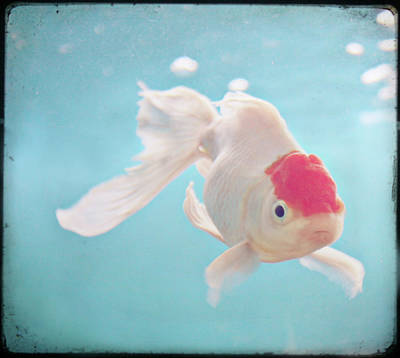 Fish In The Sea Art Print by photo by Anna Theodora