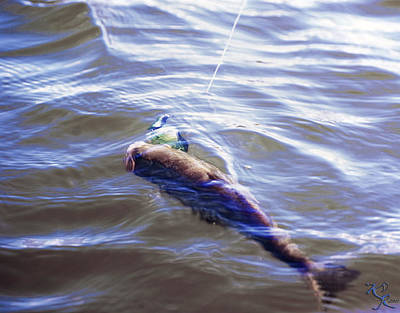 Angling Photograph - Fish In The Water by Kelly Rader