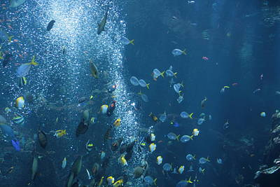 Art Print featuring the photograph Fish Menagerie by Cynthia Marcopulos
