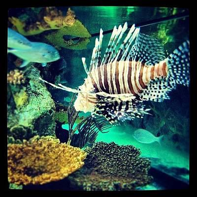 Animals Photograph - #fish #swag by Cortney Herron