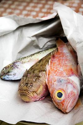 Bullheaded Photograph - Fish by Veronique Leplat