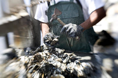 Louisiana Seafood Photograph - Fisherman Separating Clumps Of Oysters by Tyrone Turner