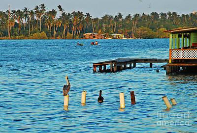 Pelikan Photograph - Fishers And Pelikans by Luis Jam