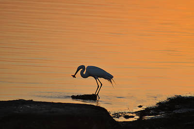 Petersburg Digital Art - Fishing Egret by Bill Cannon