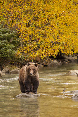 Prints Of Alaska Photograph - Fishing In The Fall by Tim Grams