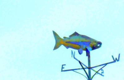 Weathervane Photograph - Fishing In Vane by Randall Weidner