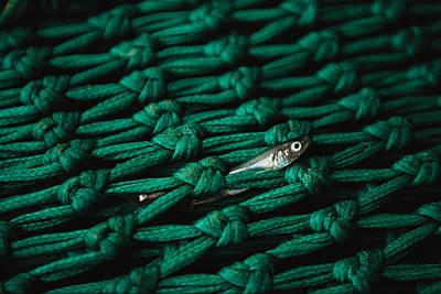 Fishnet With Fish Carcass Art Print by Joel Sartore