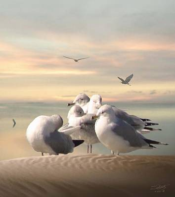 Photograph - Five Gulls At Sundown by IM Spadecaller