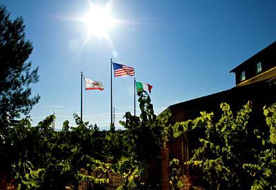 Flags At A Vineyard Art Print by Terry Thomas