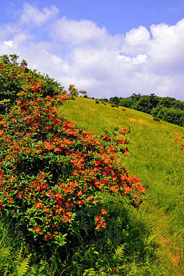 Photograph - Flame Azalea Atop Gregory Bald by Alan Lenk