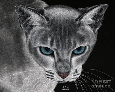 Drawing - Flame Point Siemese Cat by Sheryl Unwin
