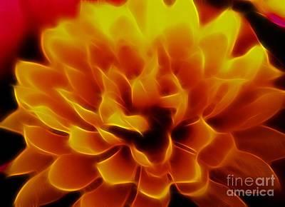 Photograph - Flaming Chrysanthemum by Denise Oldridge