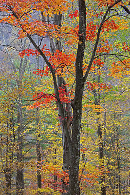 Photograph - Flaming Fall Foliage by John Stephens