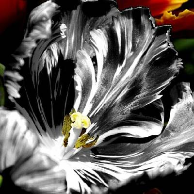 Cool Wall Art - Photograph - Flaming Flower 1 by James Granberry