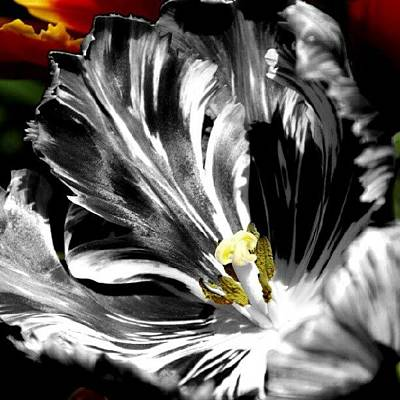 Flaming Flower 2 Art Print