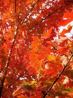Western Art - Flaming Maples by Ian  MacDonald
